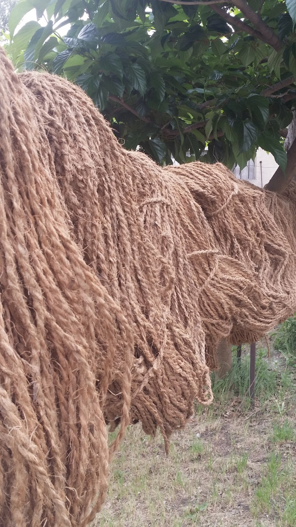 Fibres naturelles au séchage