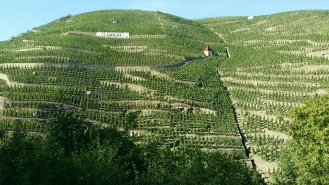 Vignobles de la Côte-Rôtie