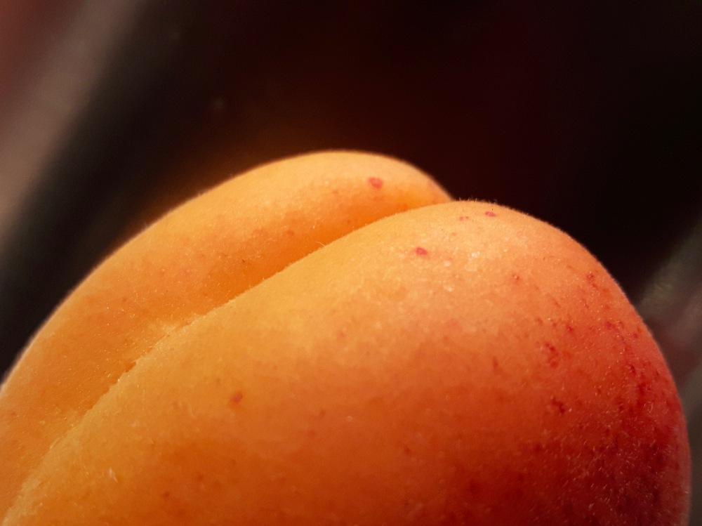 Le premier abricot.