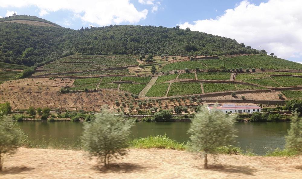 Au fil du voyage, les paysages de la Vallée du Douro.