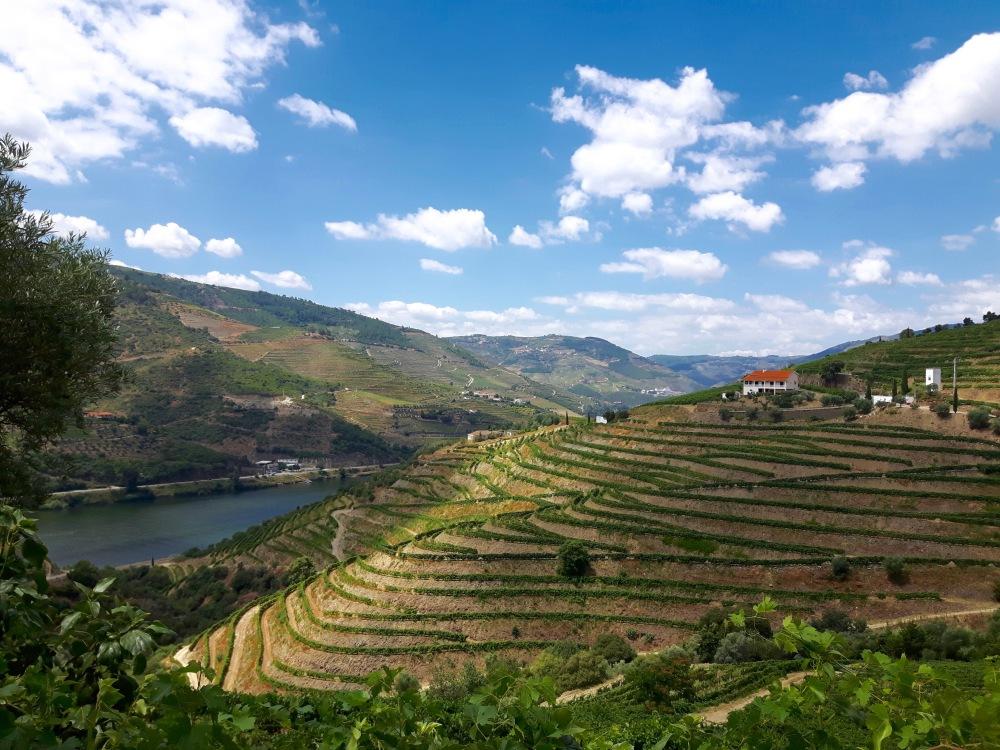 Les vignobles de la Vallée du Douro