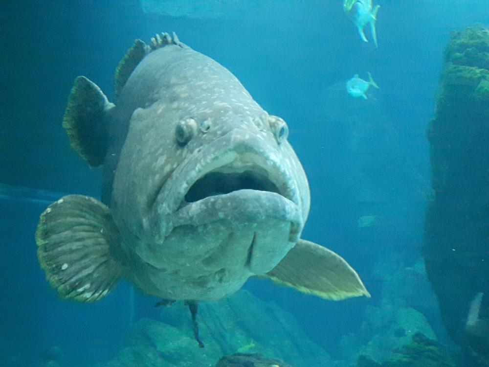 Magnifique océanarium contruit sur la partie qui a accueilli l'exposition universelle en 1998