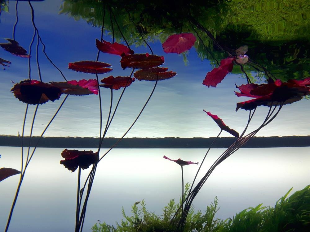 Scène d'aquarium. Exposition temporaire en marge de l'exposition permanente de l'océanorium de Lisonne. Oeuvre du photographe japonais Takashi Amano.