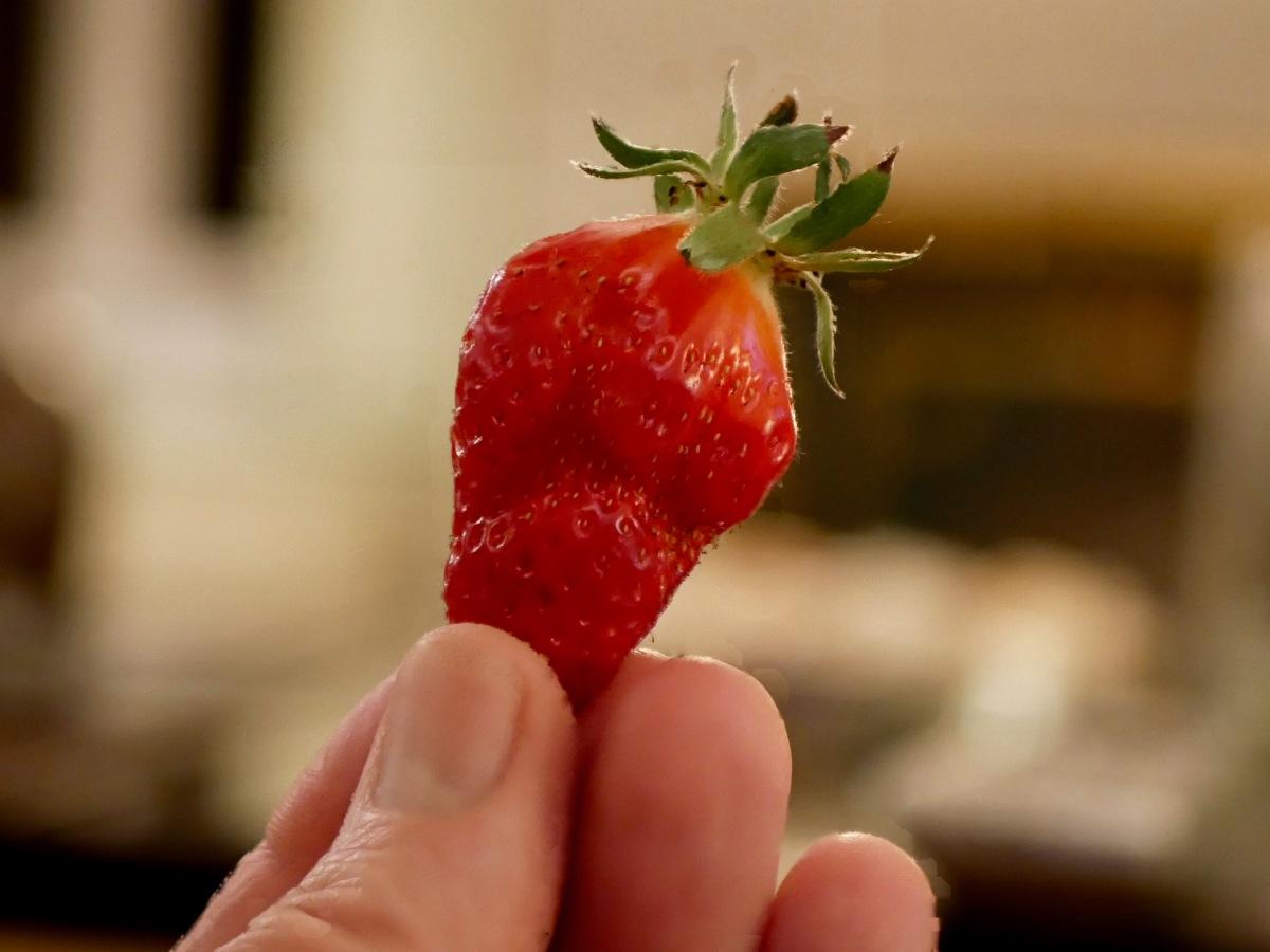 Premières fraises...